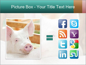 Young pig PowerPoint Template - Slide 21