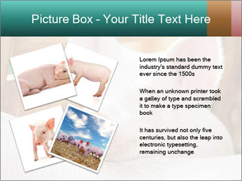 Young pig PowerPoint Template - Slide 23