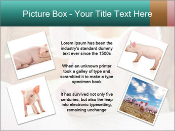 Young pig PowerPoint Template - Slide 24