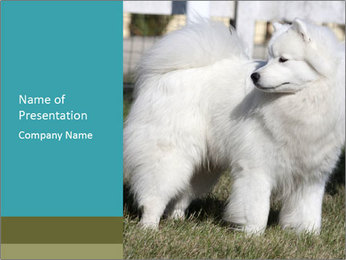 Pyrenees dog PowerPoint Template - Slide 1