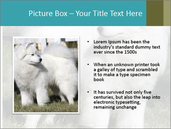 Pyrenees dog PowerPoint Templates - Slide 13