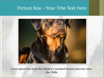 Pyrenees dog PowerPoint Template - Slide 16