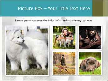 Pyrenees dog PowerPoint Template - Slide 19