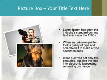 Pyrenees dog PowerPoint Template - Slide 20