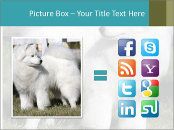Pyrenees dog PowerPoint Template - Slide 21