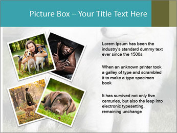 Pyrenees dog PowerPoint Template - Slide 23