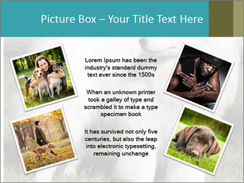 Pyrenees dog PowerPoint Templates - Slide 24