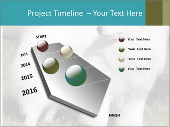Pyrenees dog PowerPoint Template - Slide 26