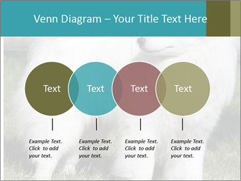 Pyrenees dog PowerPoint Templates - Slide 32