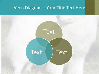 Pyrenees dog PowerPoint Template - Slide 33