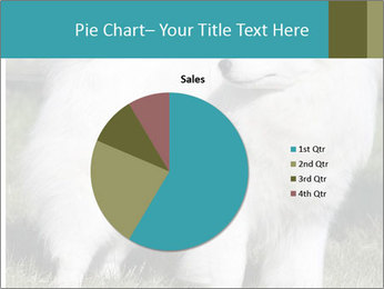 Pyrenees dog PowerPoint Templates - Slide 36
