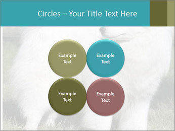 Pyrenees dog PowerPoint Templates - Slide 38