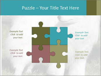 Pyrenees dog PowerPoint Templates - Slide 43
