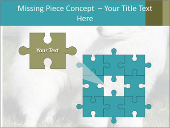 Pyrenees dog PowerPoint Template - Slide 45