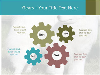 Pyrenees dog PowerPoint Template - Slide 47