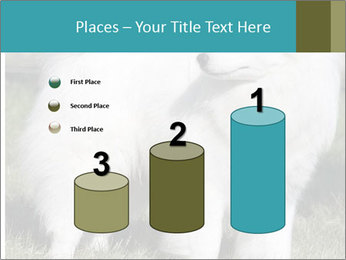 Pyrenees dog PowerPoint Templates - Slide 65