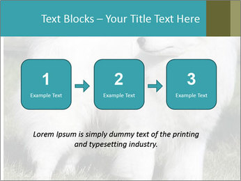 Pyrenees dog PowerPoint Template - Slide 71