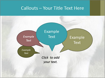 Pyrenees dog PowerPoint Templates - Slide 73