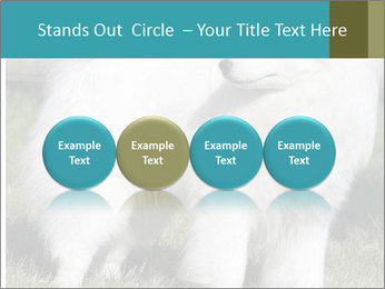 Pyrenees dog PowerPoint Template - Slide 76