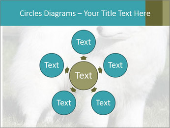 Pyrenees dog PowerPoint Templates - Slide 78
