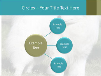 Pyrenees dog PowerPoint Template - Slide 79