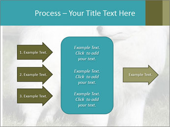 Pyrenees dog PowerPoint Template - Slide 85