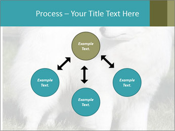 Pyrenees dog PowerPoint Template - Slide 91