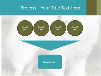Pyrenees dog PowerPoint Templates - Slide 93