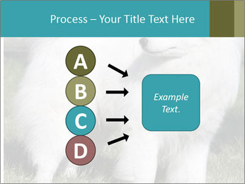Pyrenees dog PowerPoint Template - Slide 94