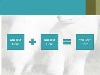 Pyrenees dog PowerPoint Templates - Slide 95