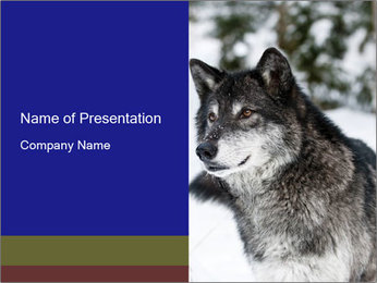 Wolf PowerPoint Templates - Slide 1
