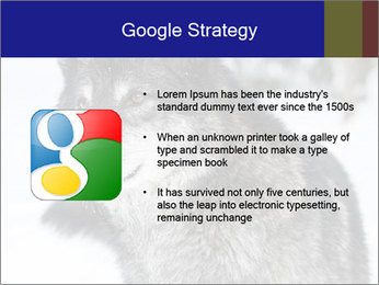 Wolf PowerPoint Templates - Slide 10