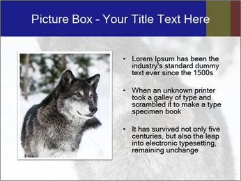 Wolf PowerPoint Templates - Slide 13