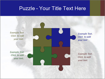 Wolf PowerPoint Templates - Slide 43