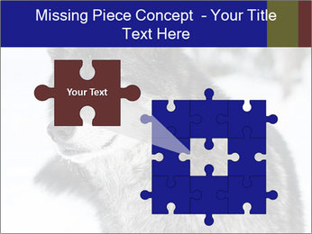 Wolf PowerPoint Templates - Slide 45