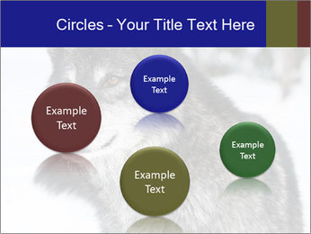 Wolf PowerPoint Templates - Slide 77