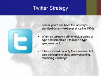 Wolf PowerPoint Templates - Slide 9