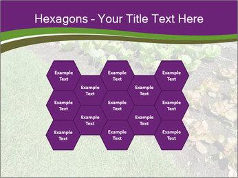 Garden PowerPoint Template - Slide 44
