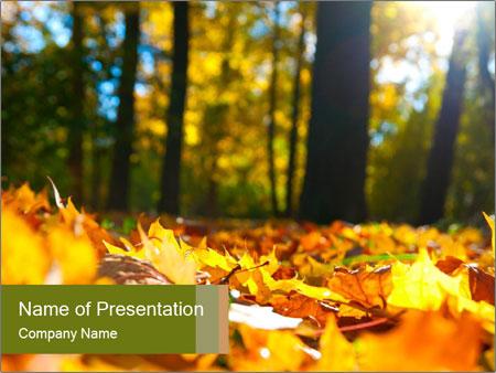 Macro PowerPoint Templates