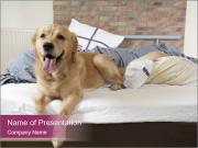 Golden retriever PowerPoint Templates