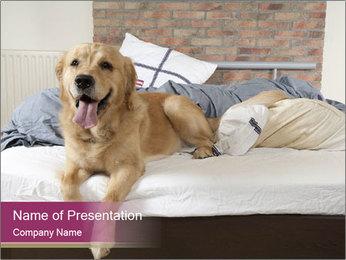 Golden retriever PowerPoint Template - Slide 1