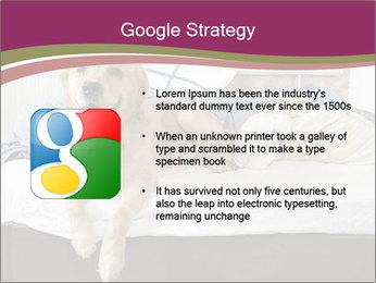 Golden retriever PowerPoint Template - Slide 10