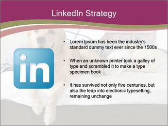 Golden retriever PowerPoint Template - Slide 12