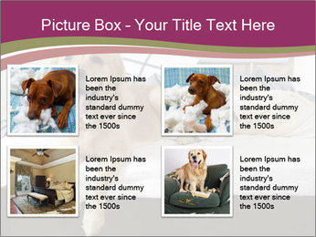 Golden retriever PowerPoint Template - Slide 14