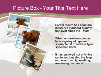 Golden retriever PowerPoint Template - Slide 17