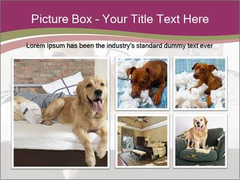 Golden retriever PowerPoint Templates - Slide 19