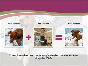 Golden retriever PowerPoint Template - Slide 22
