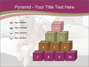Golden retriever PowerPoint Template - Slide 31