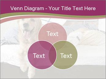 Golden retriever PowerPoint Template - Slide 33