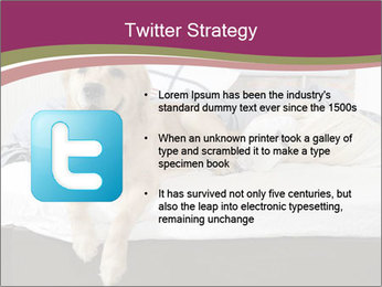 Golden retriever PowerPoint Templates - Slide 9